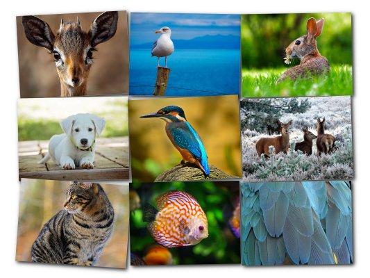 Fotocollage als Raster mit Tierbildern