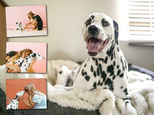 Fotocollage mit Lieblingsbild als Hintergrund mit Hundebildern