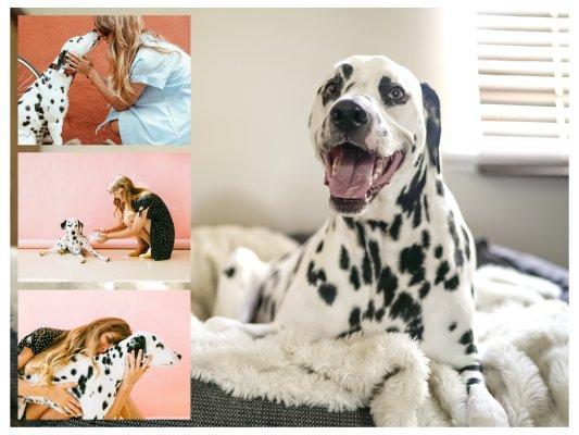 Fotocollage vom eigenen Hund mit großem Bild