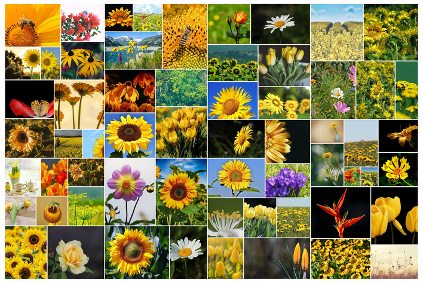 Wilde Collage aus Fotos von Blueten aus dem Garten
