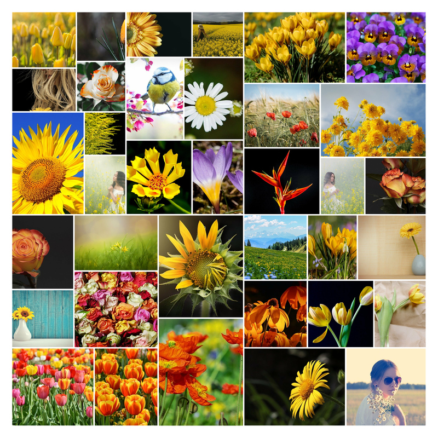 wilde Collage mit Blumen Fotos aus dem Garten